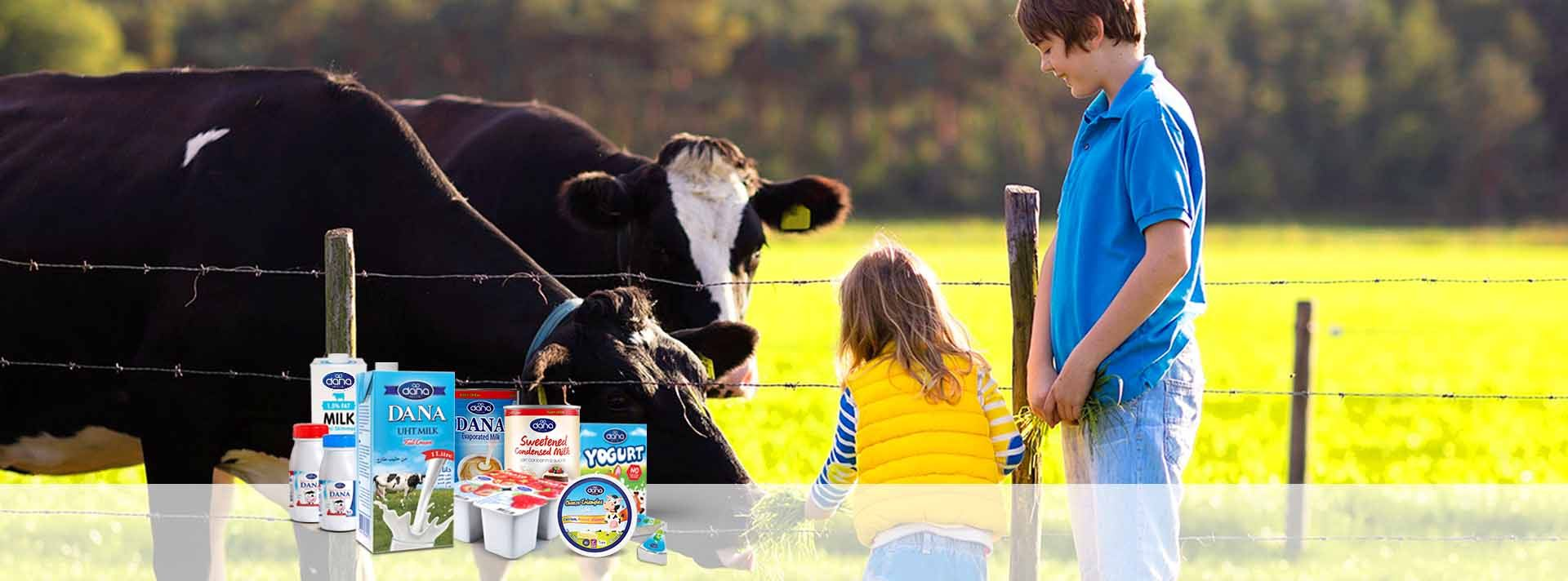 DANA Dairy is manufacturer and supplier of Dana brand long-life milk, long-life yogurt, long-life cheese, sweetened and unsweetened condensed milk. We supplier to all world destinations.